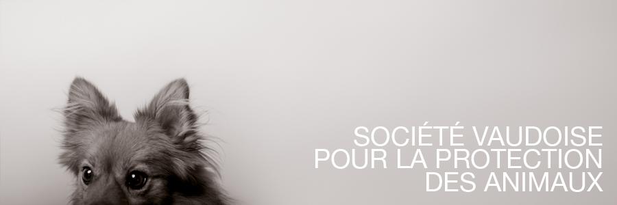 Svpa Societe Vaudois De La Protection Des Animaux